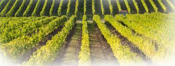 Agriculture - Terroir